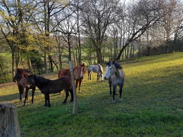 chevaux du centre équestre