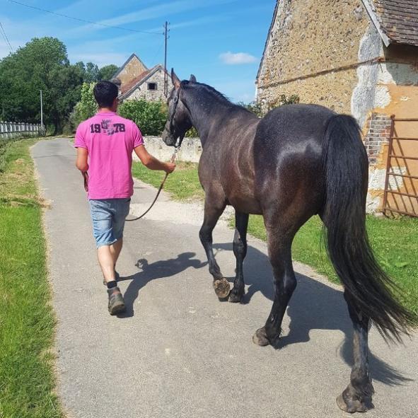 balade d'un cheval